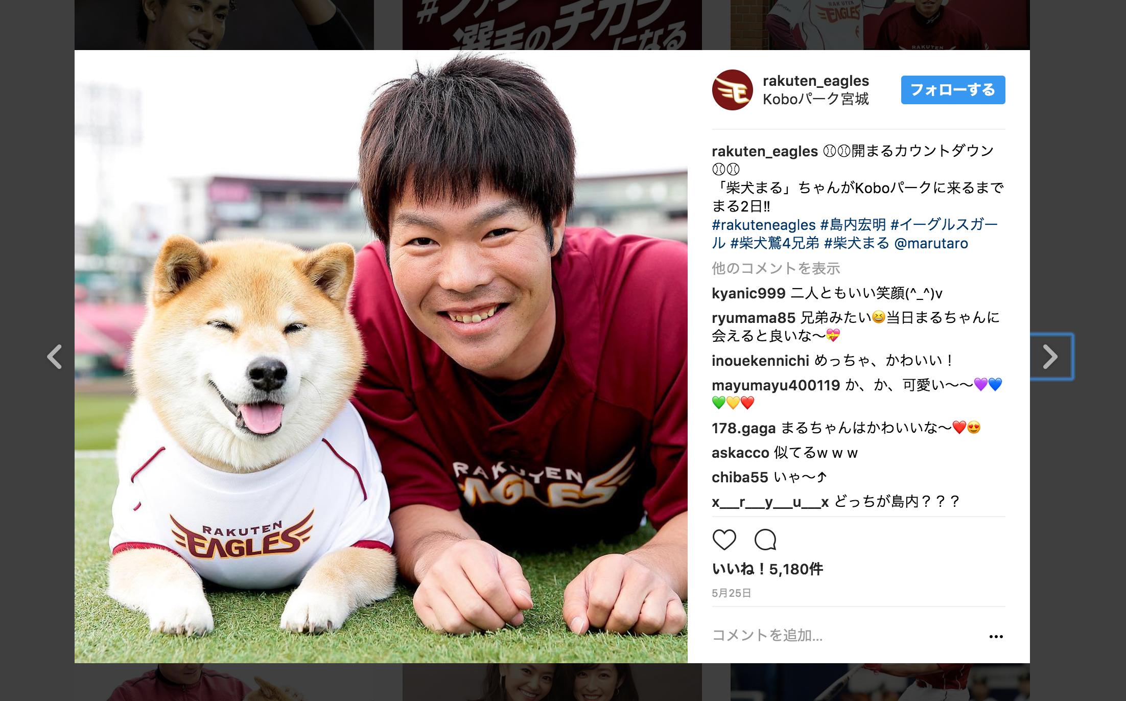 Koboパーク宮城「柴犬まる」がやってきた!!