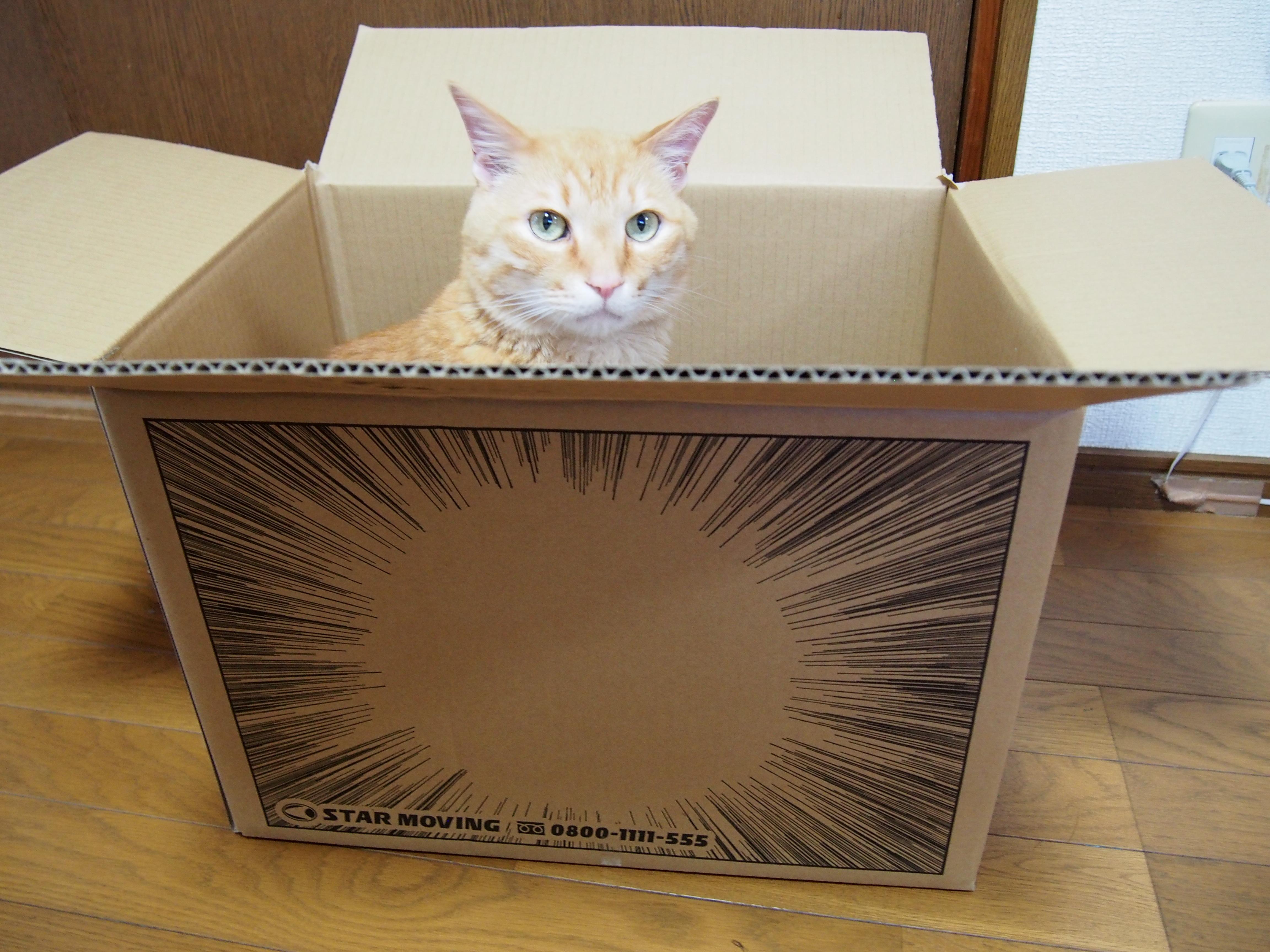 ネコと一緒に引越するときの気をつけるべきこと