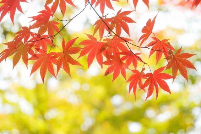 【転勤シーズン】秋のお引越♪