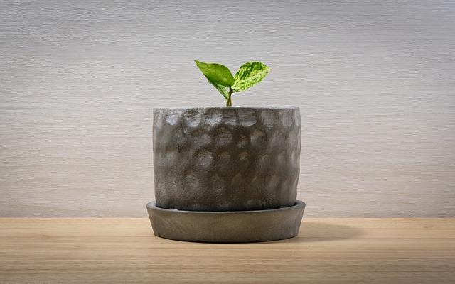 キレイなオフィスに新鮮な緑はいかが?オススメの観葉植物を紹介!