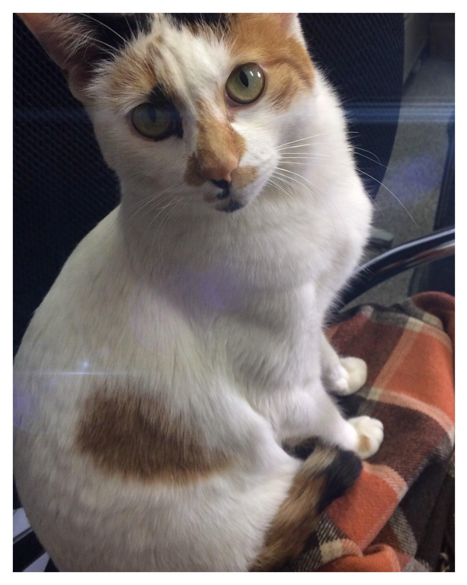 仙台の看板猫 にゃんちゅうのご紹介♪