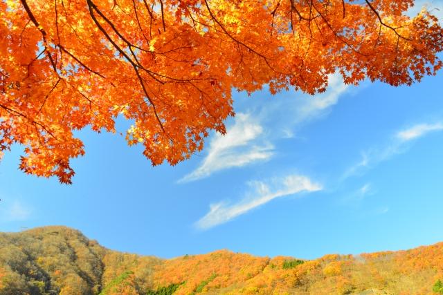 【関東圏内の10月中旬以降で見頃の紅葉スポット!】