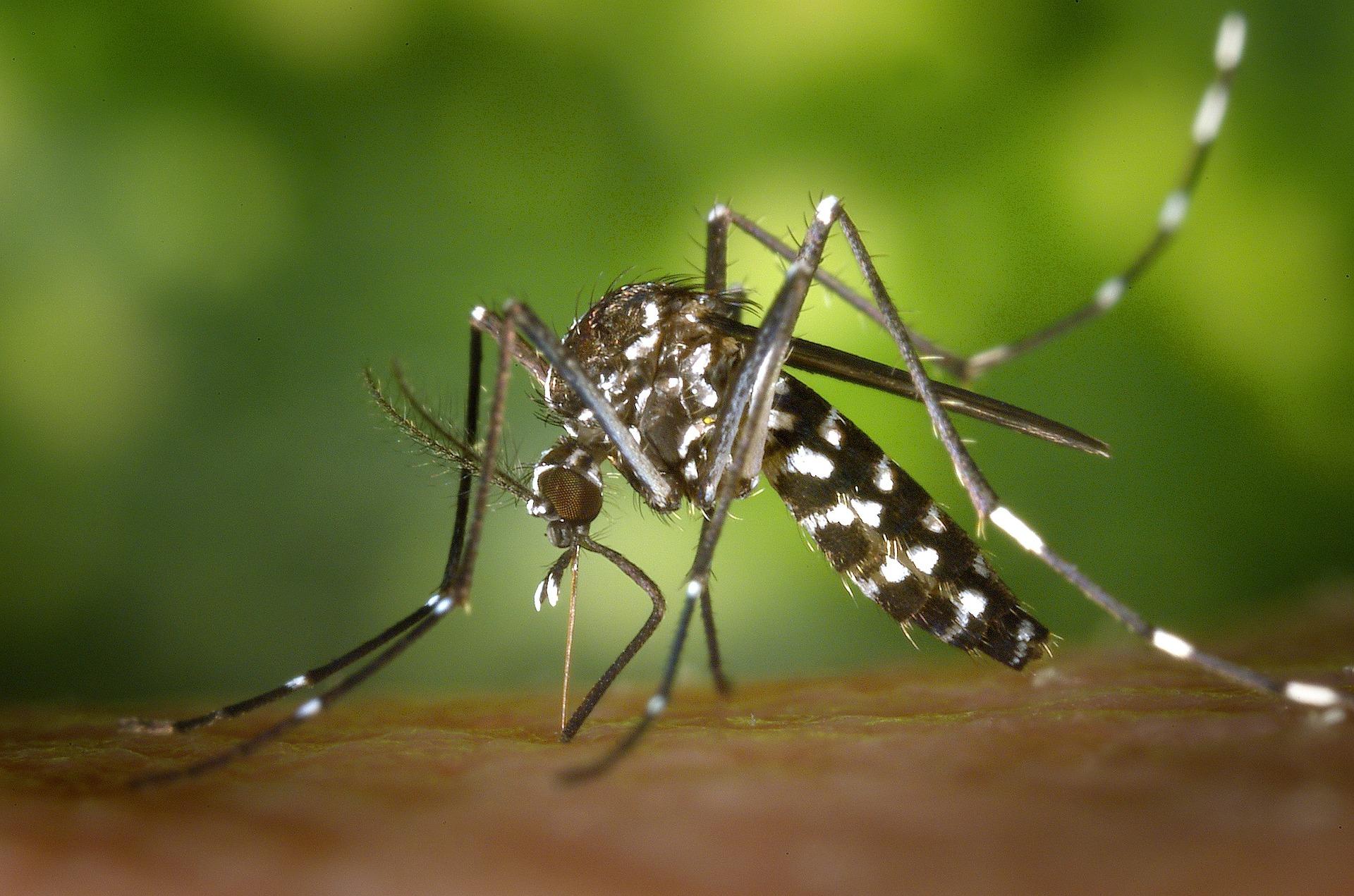 蚊が大量発生?原因と対策