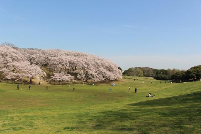 kouenyokohama19